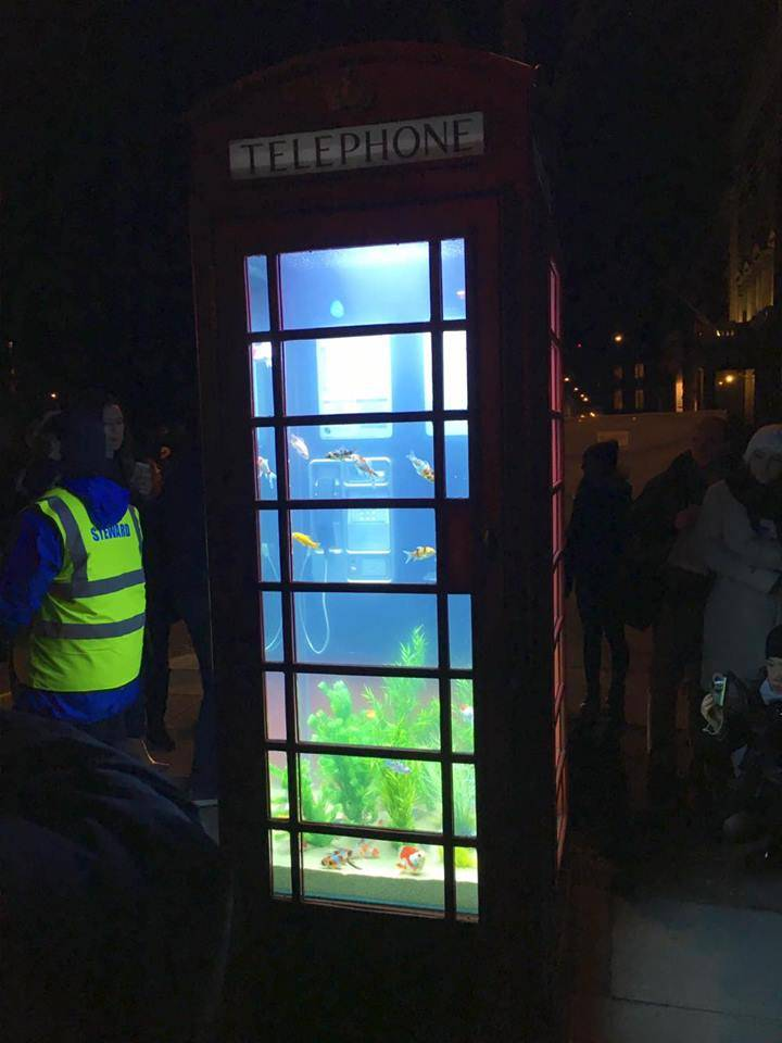 Aquariam, Benedetto Bufalino & Benoit Deseille @ Grosvenor Square, for Lumiere London