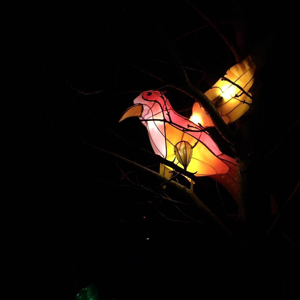 Bird in a Tree, Magical Lantern Festival @ Chiswick House & Gardens